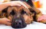 Отравление у собаки: как помочь животному?