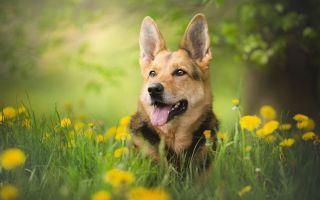 10 самых интересных и познавательных фактов о собаках