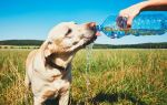 Как помочь собаке пережить жару: основные рекомендации