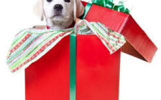 Собака — лучший подарок ребёнку на Новый 2021 год