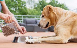Рацион питания собаки: как подобрать корм?